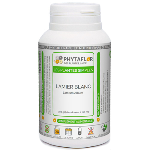 Lamier Blanc Phytaflor