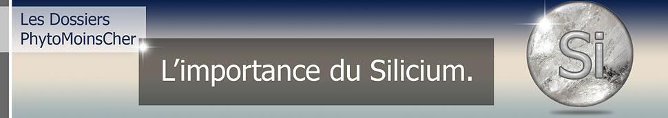 L'importance du Silicium