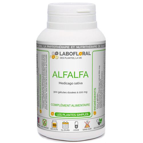 Alfalfa plante Phytaflor