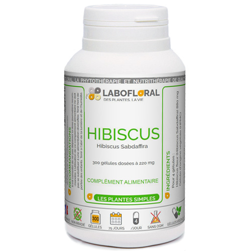 Hibiscus Phytaflor