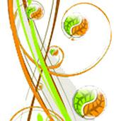 Plantes en gélules1