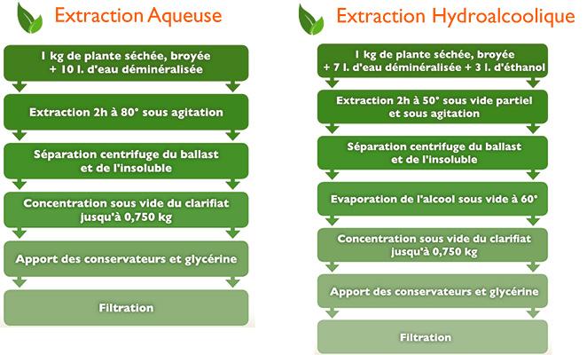De la plante à l'extrait fluide : un mode d'extraction adapté à chaque plante
