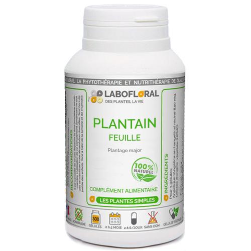Plantain Phytaflor