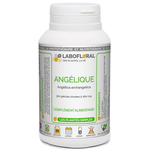 Angélique racine Labofloral